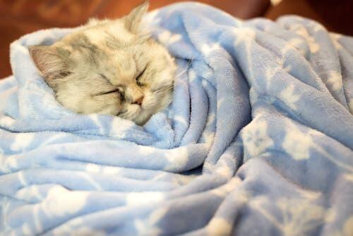 Les chats hibernent-ils en hiver ?