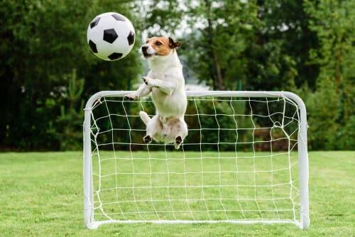 L'exercice chez les chiens peut passer par les jeux de balles