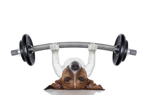 L'exercice chez les chiens