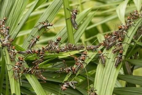 Des criquets sur l'herbe.