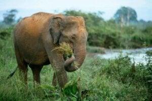 Certaines maladies bactériennes chez les éléphants sont dues à l'alimentation
