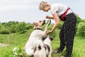 Une femme procédant à l'entraînement des chiens