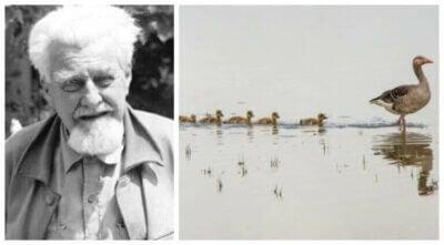 Konrad Lorenz et les modèles de comportement animal