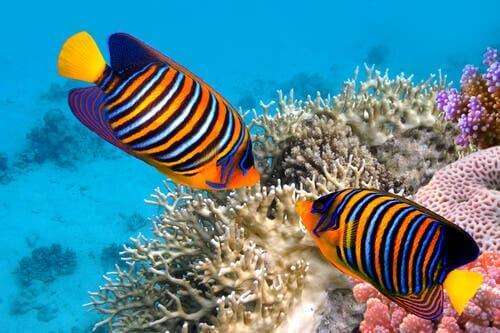 5 curiosités sur les poissons colorés