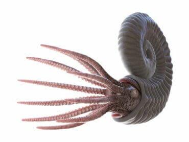 Le monde fascinant des ammonites fossilisées