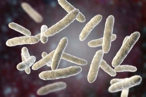Les bactéries à l'origine de la pneumonie.