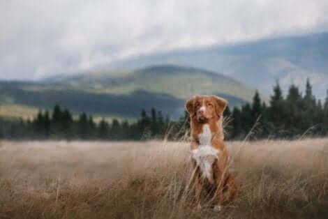 Un chien dans un champs.