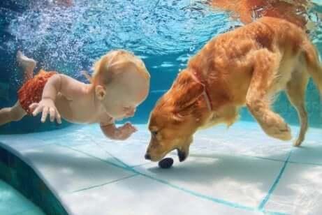 Qu'apporte la natation pour les chiens ?