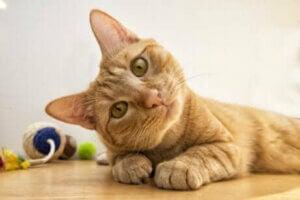 Les chats adorent jouer.