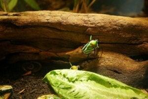 Voici un scarabée dans un terrarium.