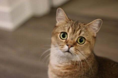 Le stress figure parmi les maladies mentales chez les chats.