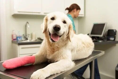 Les soins post-chirurgie orthopédique chez le chien