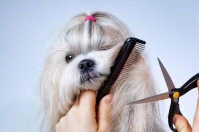 Est-il bénéfique de couper les poils des chiens quand il fait chaud ?