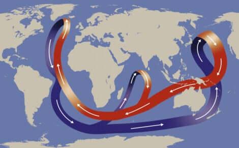 Le courant du golfe affecte la faune marine.