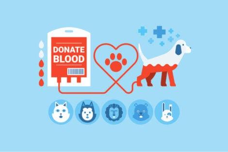 Le don de sang chez les animaux domestiques.