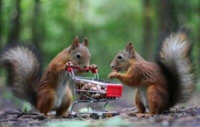 Celui qui conserve a toujours des réserves : les animaux qui stockent des vivres