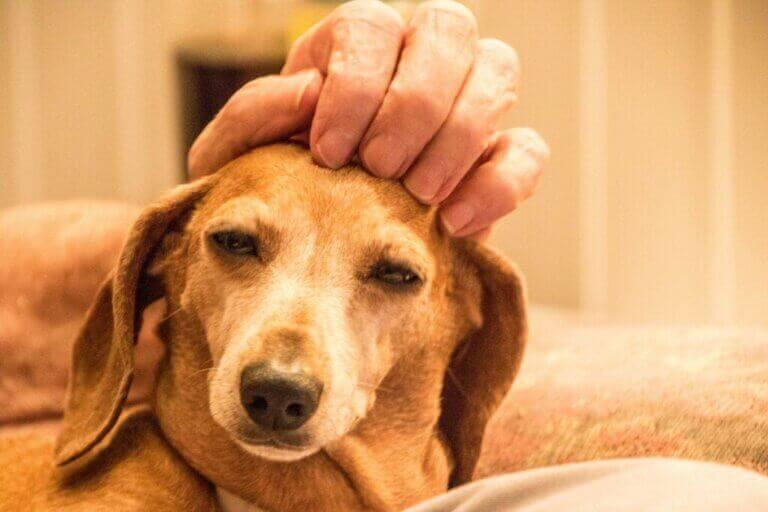 Les Trophées Bien-être Animal, une excellente initiative