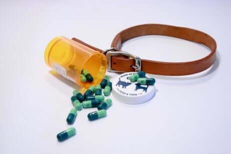 Des médicaments pour chien visant à traiter la septicémie.