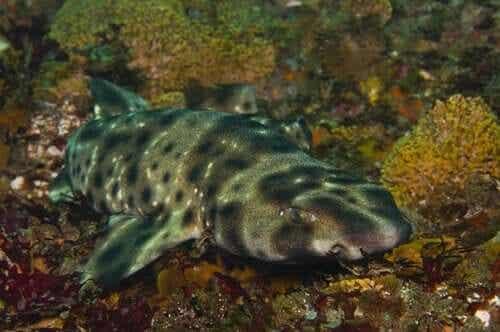 Le secret des requins et de la bioluminescence