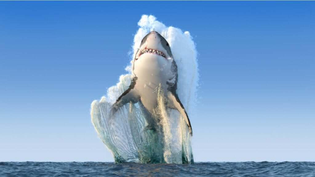 Est-il vrai que les requins ne sont jamais malades ?