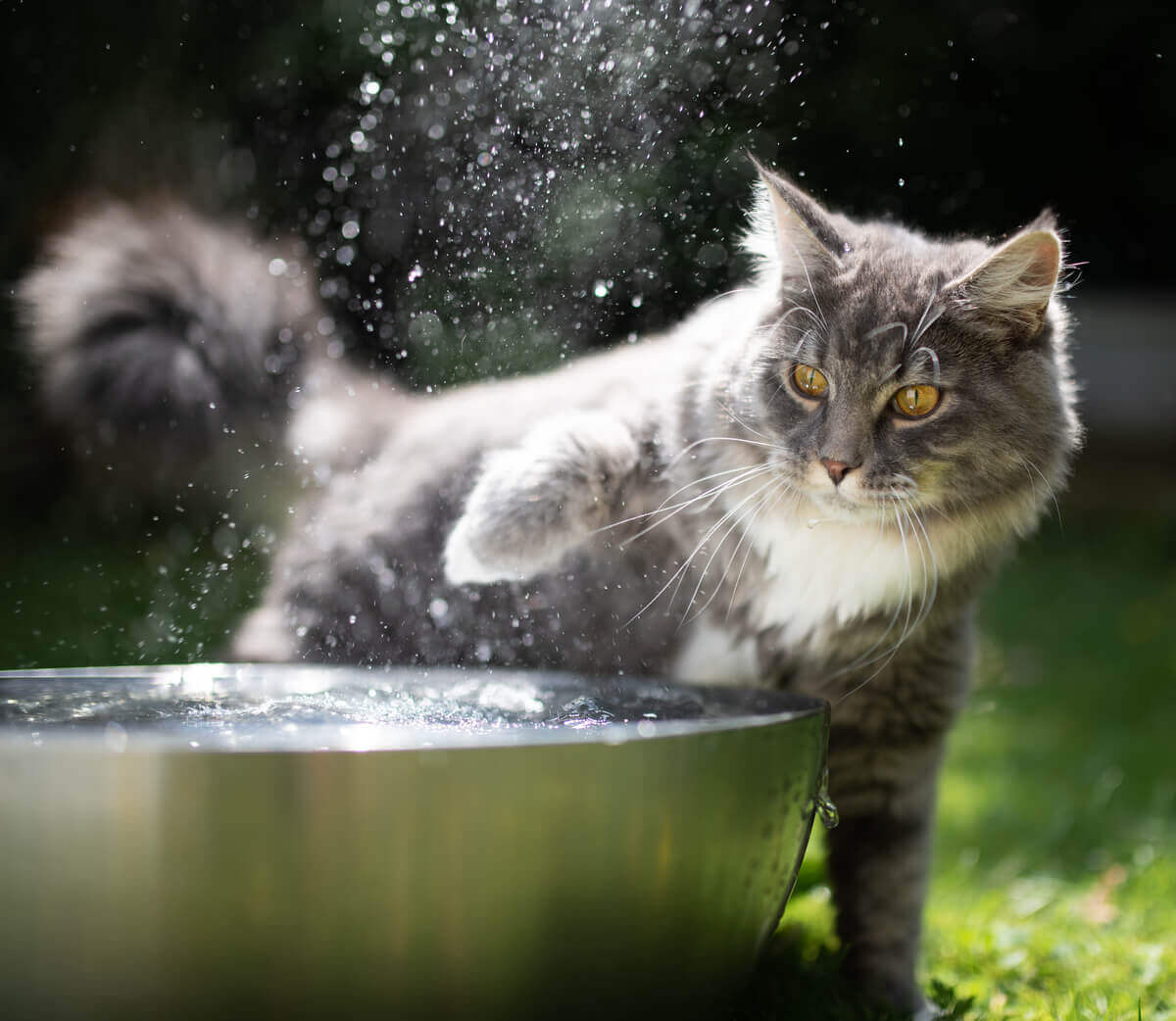 Les chats n'aiment pas l'eau.