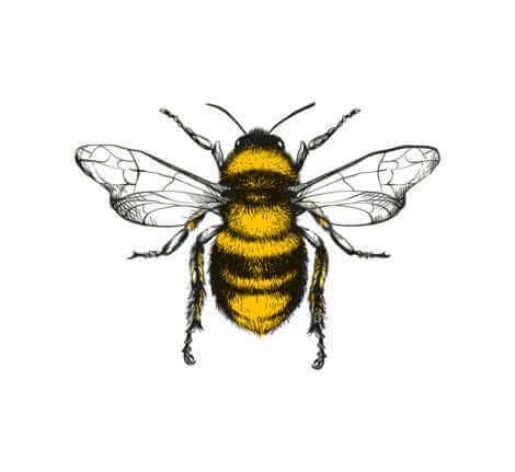Découvrez la danse des abeilles.