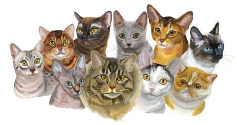 Illustration qui représente différentes races de chat.