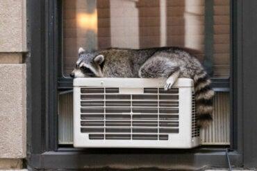 La thermorégulation chez les animaux