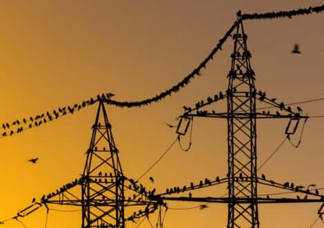 La pollution sonore peut masquer la communication entre oiseaux.
