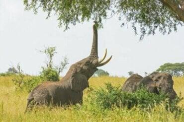 Les particularités de l'alimentation des éléphants en captivité