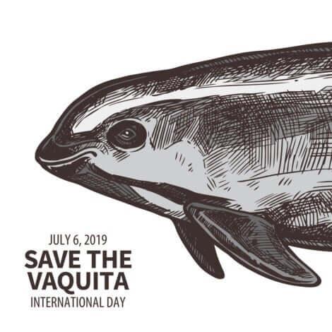 Une affiche pour sensibiliser à la situation de la vaquita marina.