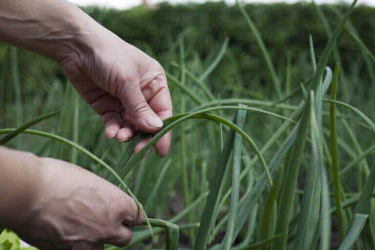 Qu'est-ce que l'agroécologie ? Découvrez-le ici !