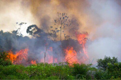 Les animaux sont les premières victimes des incendies de forêt.