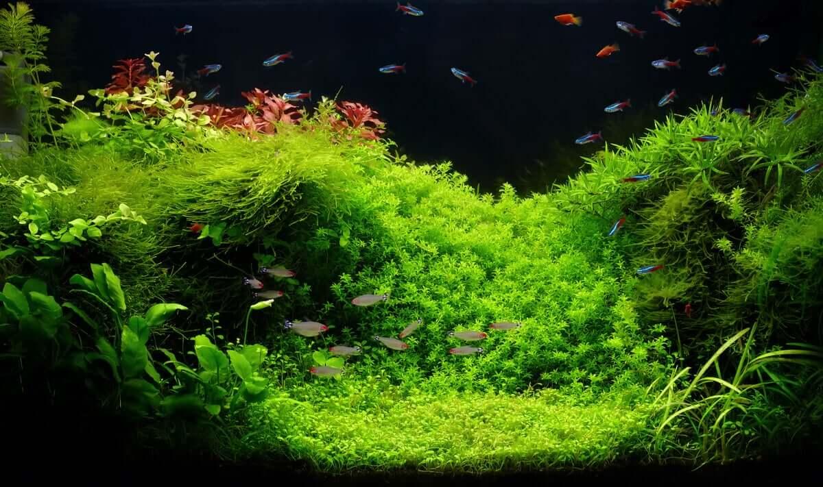 Aquarium avec des plantes.