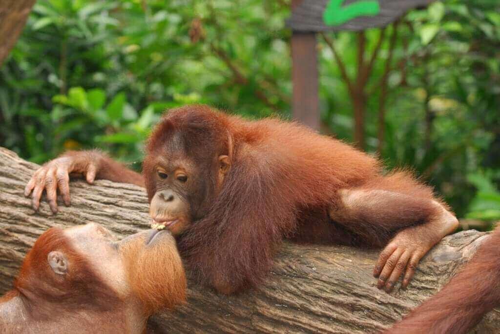 Le baiser existe-t-il dans le règne animal ?