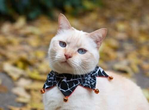 Un chat qui porte des clochettes à son cou.