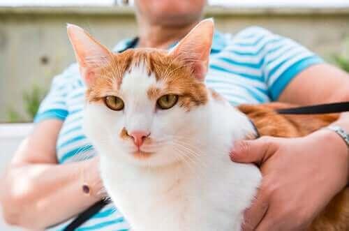 Les chats adorent être avec leurs maîtres