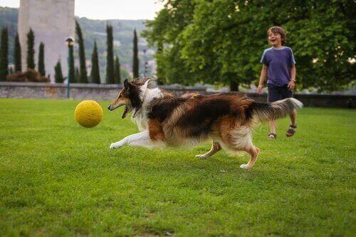 Un chien et un enfant qui jouent avec une balle.