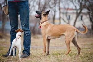 Homme et chien sont meilleurs amis.