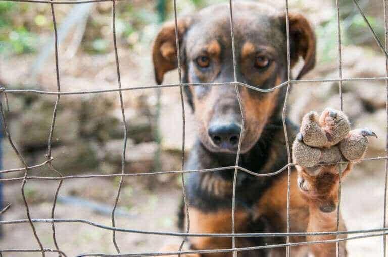 Corée du Nord : les chiens sont interdits dans la capitale