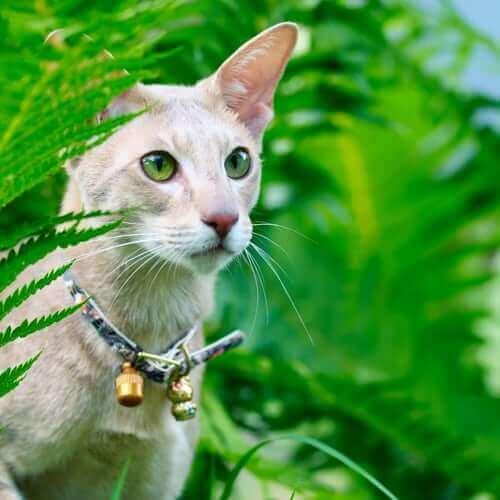 Faire porter une clochette à son chat peut être dangereux.