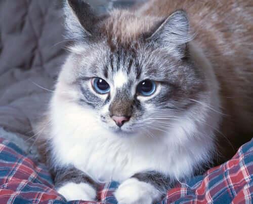La curiosité peut être à l'origine de l'empoisonnement d'un chat.