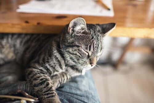 Que faire en cas d'empoisonnement chez les chats ?