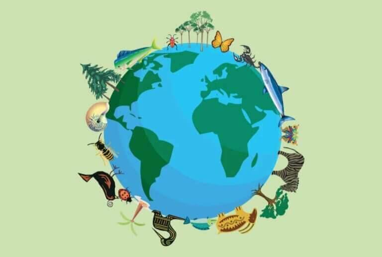 Combien d'espèces animales y a-t-il sur Terre ?
