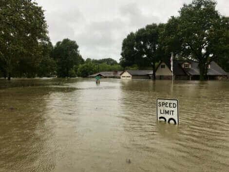 Deux chevaux sauvés d'une inondation.