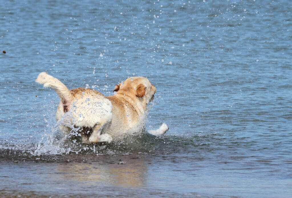Les secours maritimes sauvent un chien dans la mer