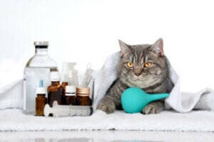 Quels sont les symptômes de la leucémie chez les chats ?