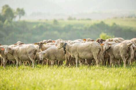 Agroécologie et système de bétail.