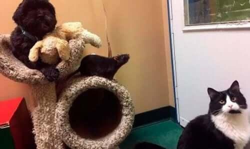 Chien, chat et rat : 3 amis inséparables