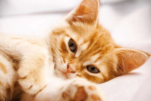 Les vomissements chez le chat peut indiquer la présence de parasites.